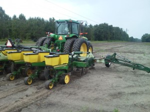 Planting cotton on May 21, 2013. This farmer was strip tilling into winter weeds.
