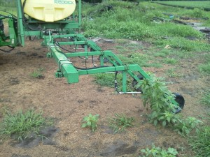 Lay-by sprayer for cotton (Palmer amaranth)