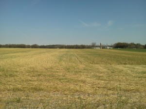 Rolled rye cover crop with burndown herbicide applied.