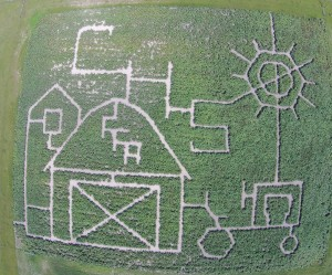 Corn maze at Columbia High School.