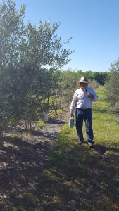 Jonathan Carter stands among olive trees on his farm while addressing visitors